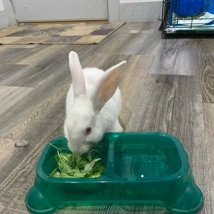 Selling bunny name grace comes with cage